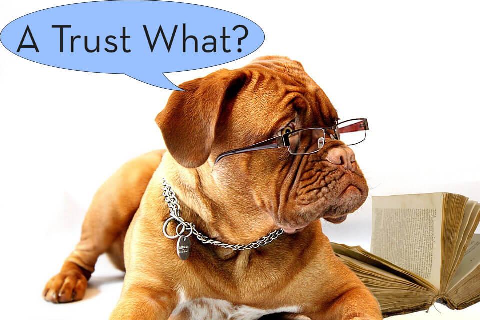trustee dog trusts probate pro darren findling